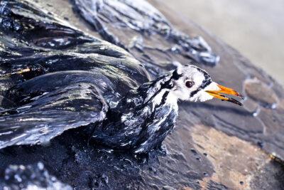 salviamo i mari disastro petrolio in acqua