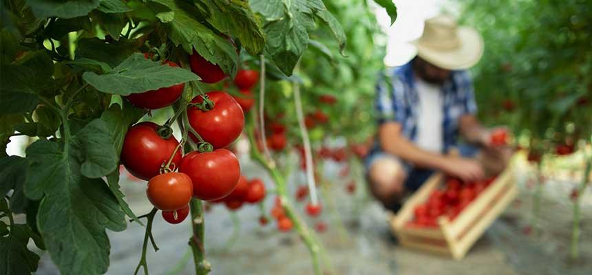 mangia in modo sostenibile per salvare il pianeta